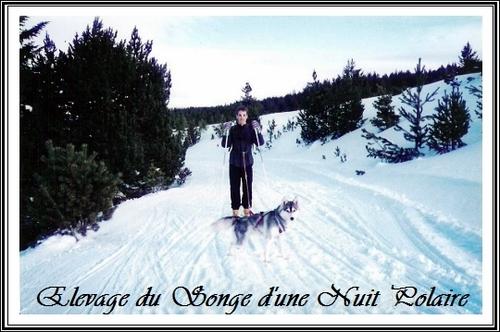 Sport et Husky Ski Joring