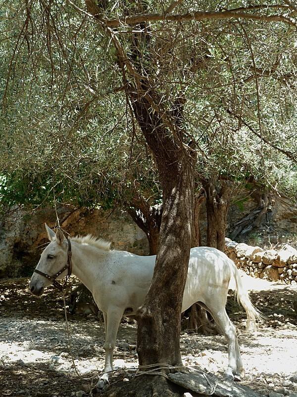 Samaria-4.jpg