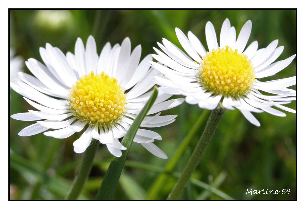Fleurs----jardin-0243.jpg