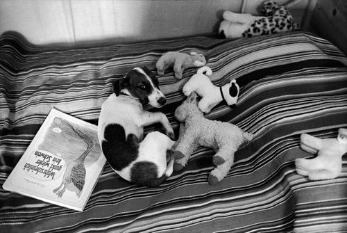 Des  petites ou grosses bêtes en photos