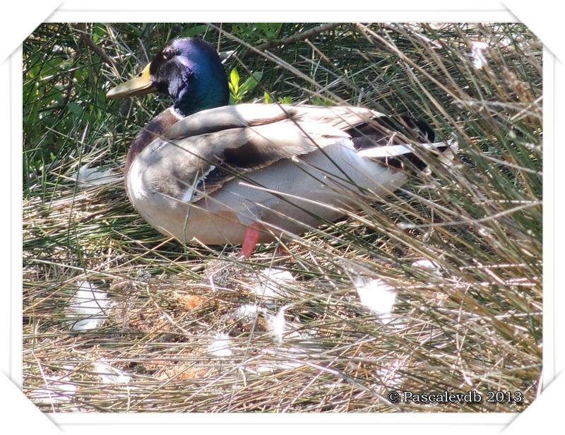 Printemps à la réserve ornitho du Teich - 11/16