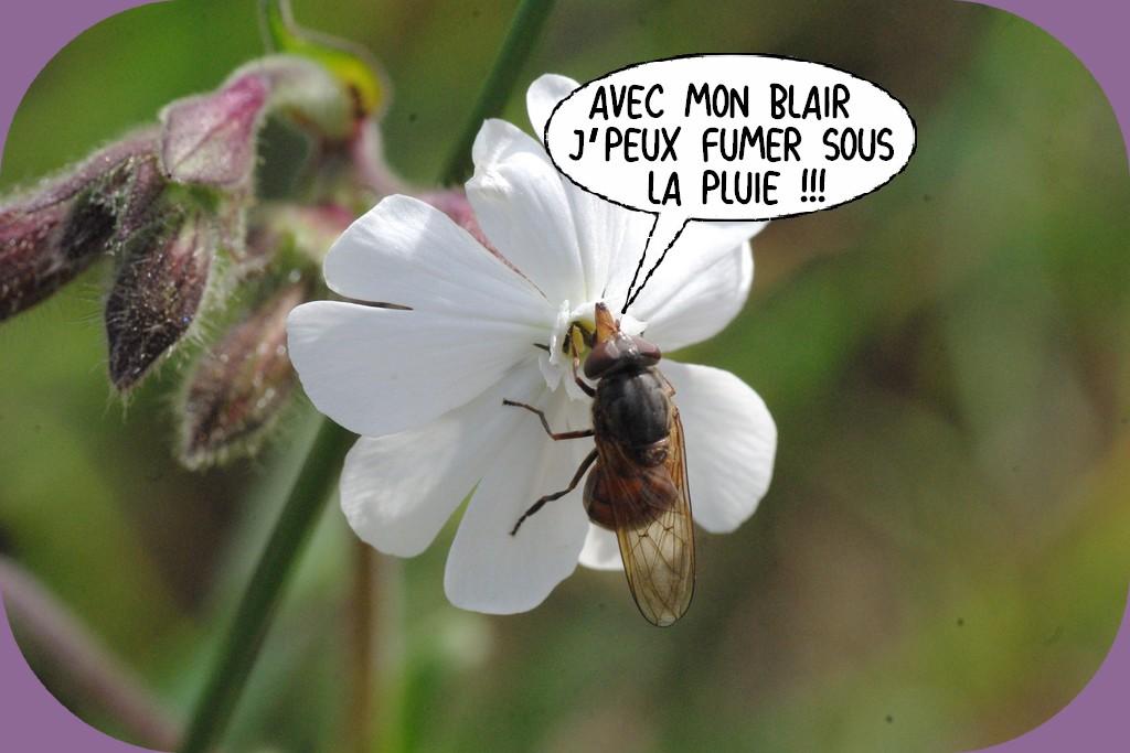 L'HUMOUR DU DIMANCHE 17 MAI
