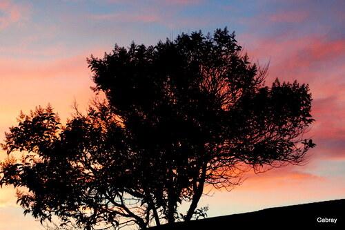 Le soleil du soir au Barcarès ...