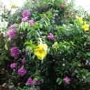 Dans mon jardin (4) - Photo :  Bobnad