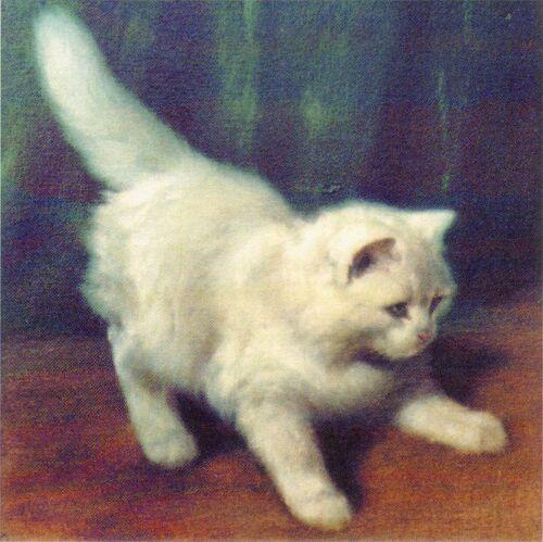 Tableau du samedi : Jeune chat Angora