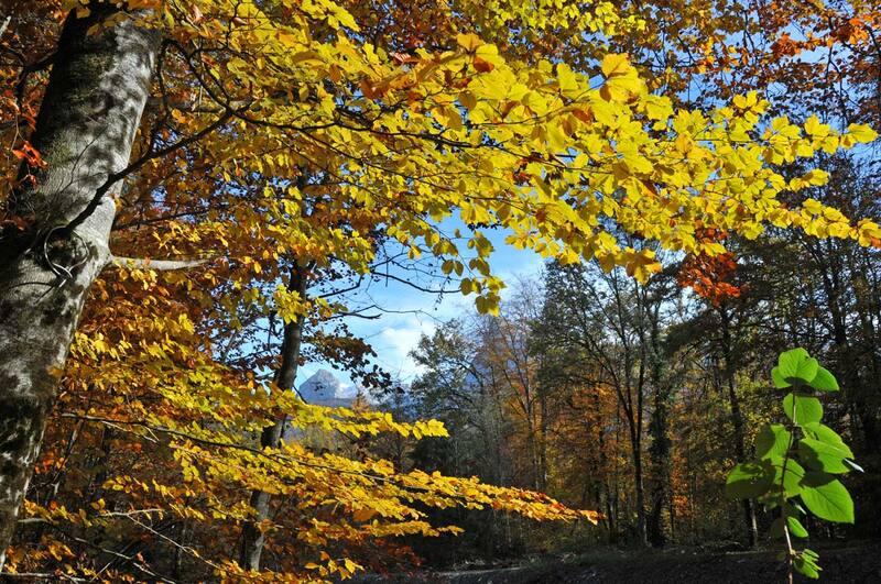 L'automne au Verney (#2)