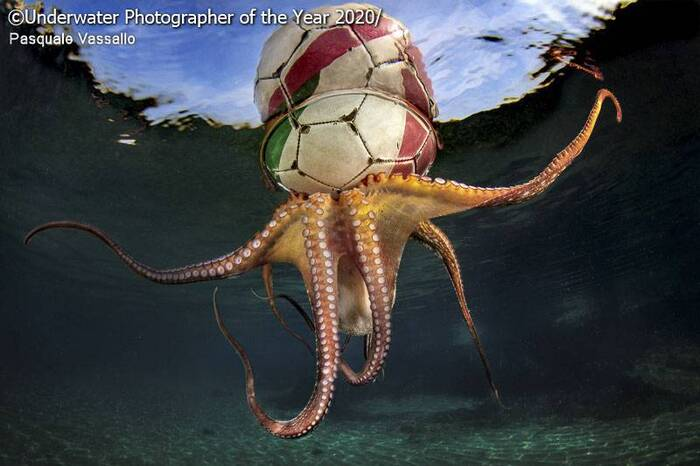 Gagnants du concours Underwater Photography 2020