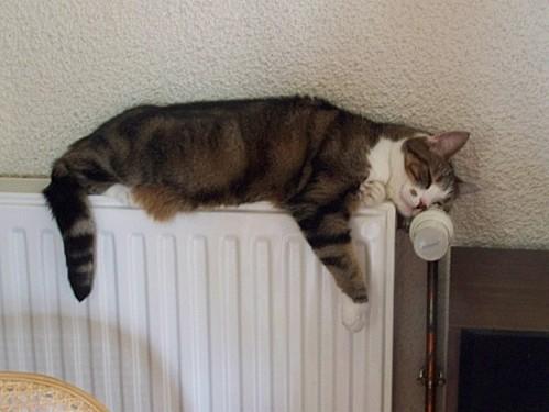 Mousse sur le radiateur fin oct 2012 2