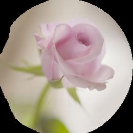♥ La rose ♥