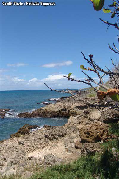 Blog de lisezmoi : Hello! Bienvenue sur mon blog!, L'archipel de Guadeloupe : l'ile Marie-Galante
