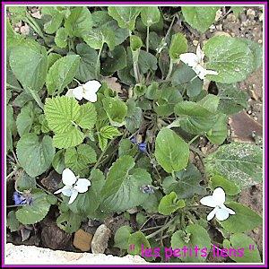 Fleurs pâques 2010 004cadré GF