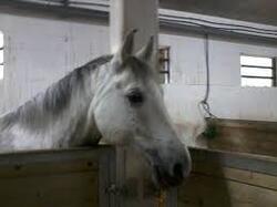 voici des chevaux et poney de brimborion