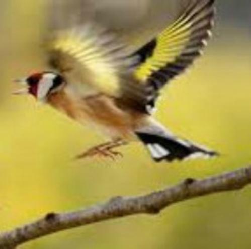 La sagesse du petit oiseau