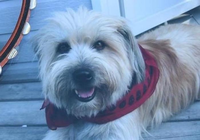 CHANTOUVIVELAVIE : Les éboueurs écrasent un chien, puis le jettent dans leur camion-benne