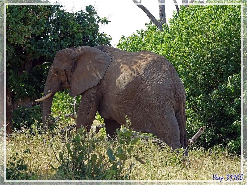 Le safari se termine et on peut enfin observer un éléphant de très près ! - Safari terrestre - Parc National de Chobe - Botswana