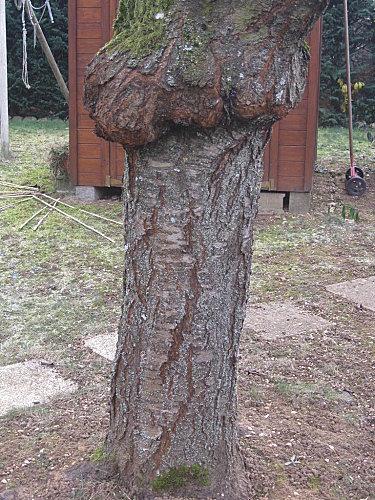 defi-photos les troncs