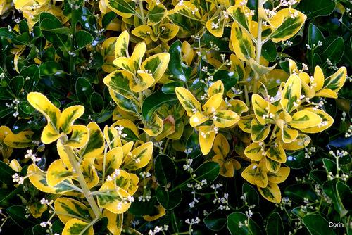 Joli feuillage jaune