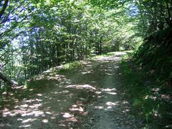 Chemin d'Arles 2008 - Saint Gervais sur Mare (35km)