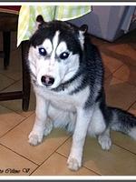 Larko (6,5 mois)