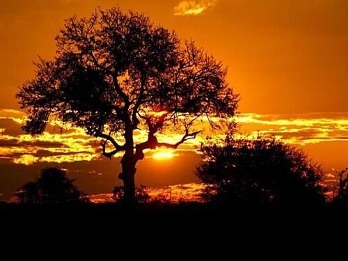 safarideux-thumb-940x705-1696-600x450