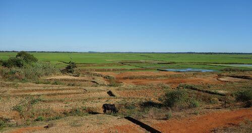24 juin au 28 juillet - Madagascar