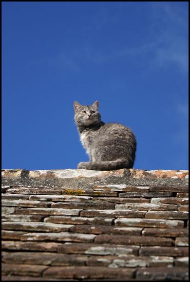 17 - Encore des chats sur les toits