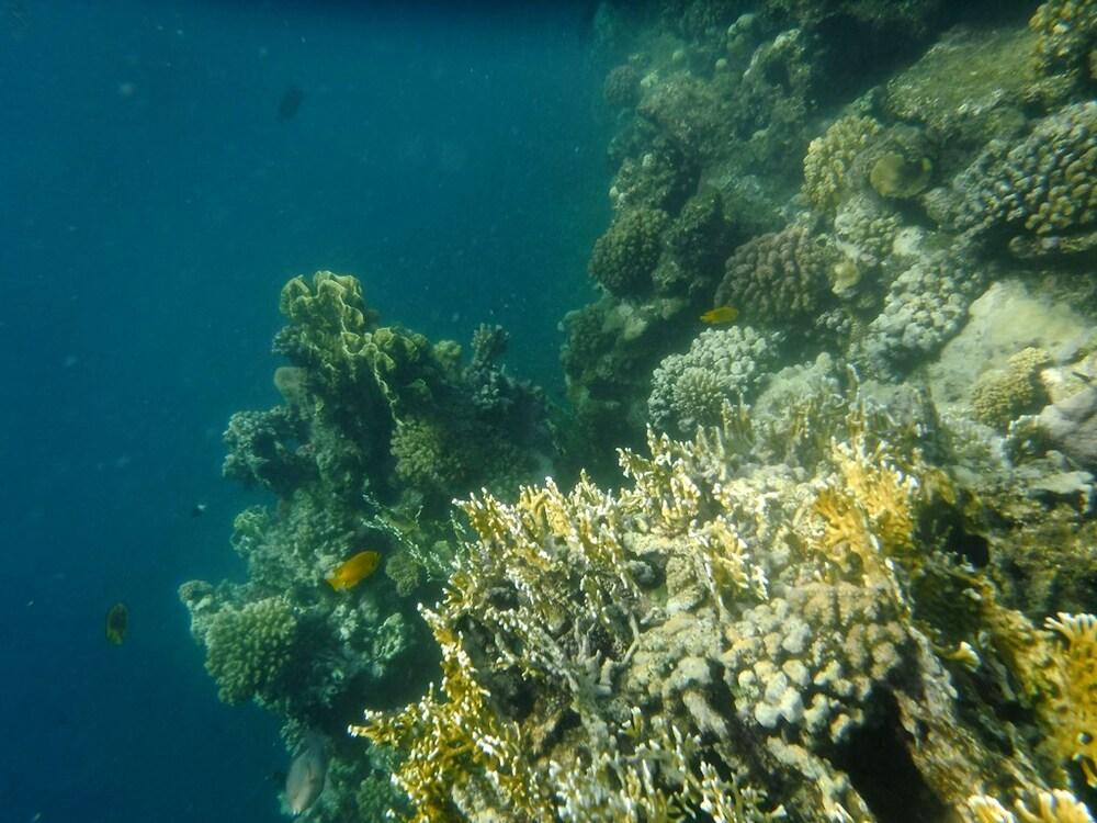 égypte - marsa alam - poissons