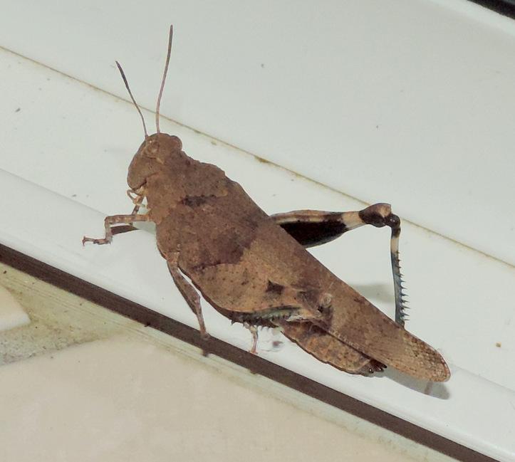 Coup d'oeil sur les insectes du jardin...
