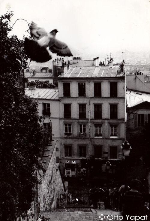 pigeon-montmartre.jpg