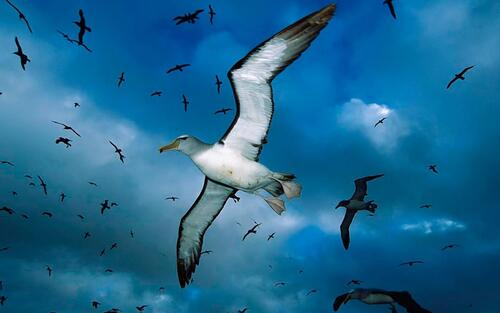 Libre comme une Mouette-( Free as a Seagull )