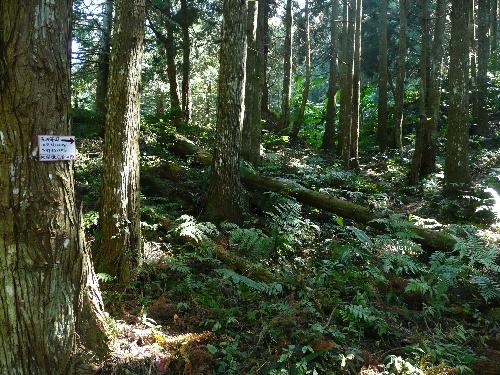 Sentiers forestiers