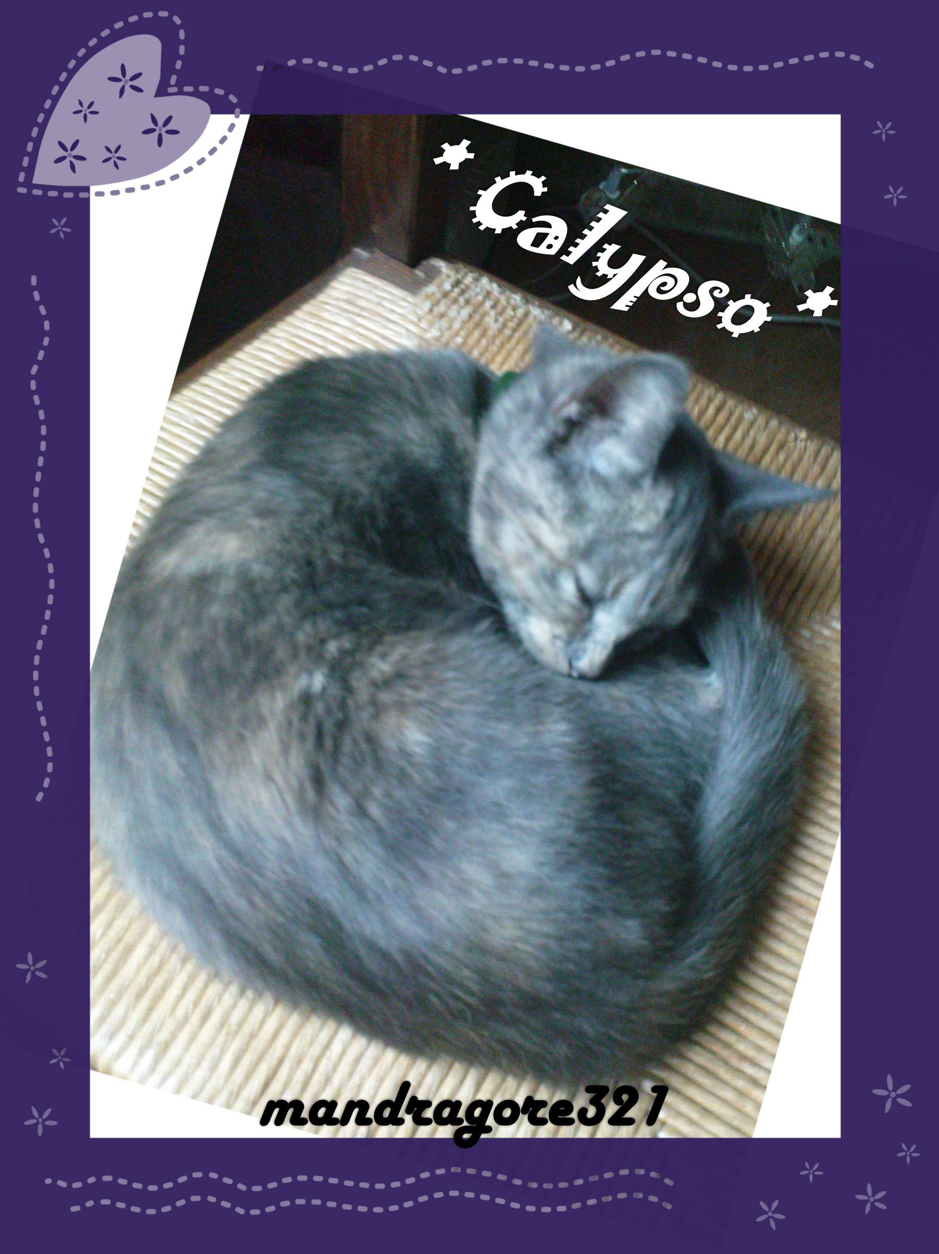 Calypso.2010.2012