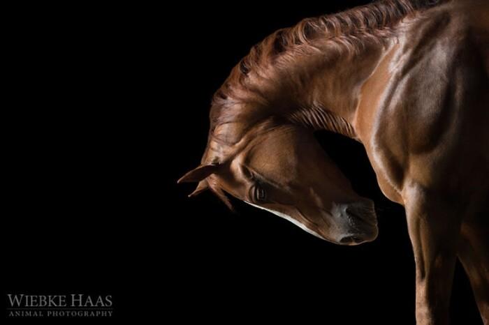 Elle photographie les chevaux et nous livre ses plus beaux portraits