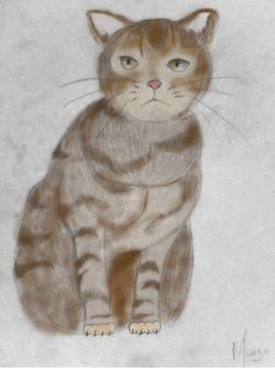 un chat ~