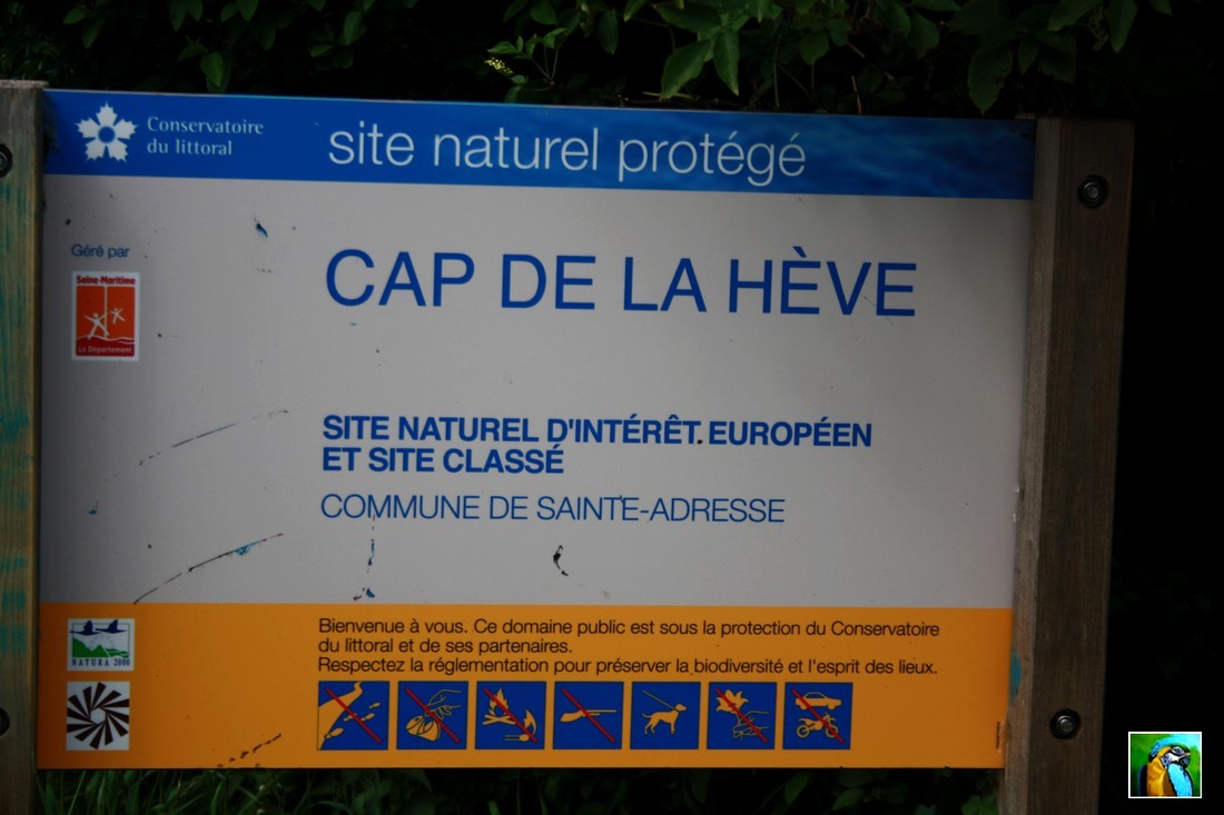 NORMANDIE mai 2017 : CAP de la HEVE