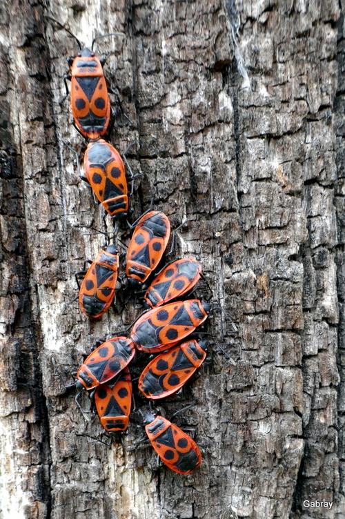 Les insectes au soleil de mars