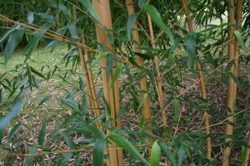 La bambouseraie de Fismes