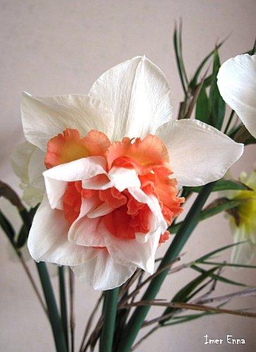 Fleurs-3102.JPG