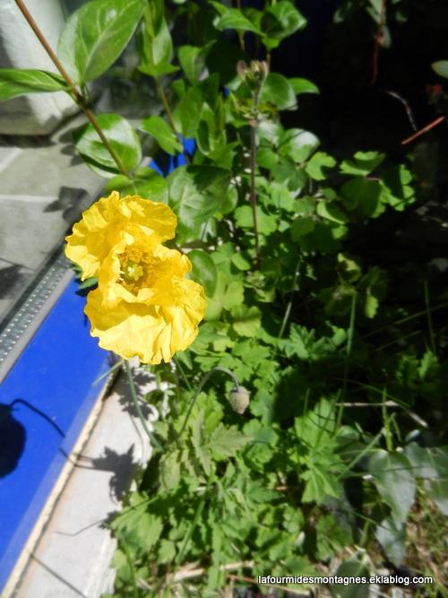 Passages au jardin