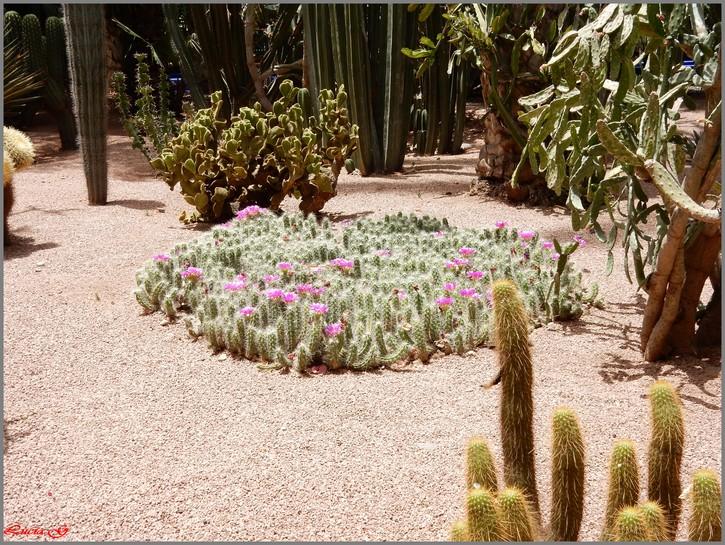 Jardin de Majorelle (fin)