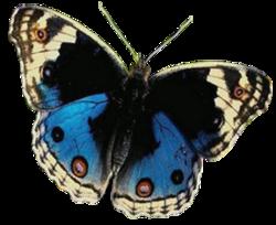 Hommage aux papillons