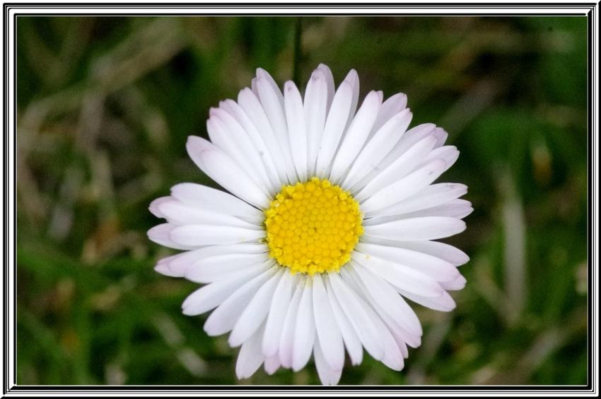 Quelques fleurs pour vous souhaiter..................................
