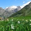 Narcisses, Randonneurs et Montagnes.jpg