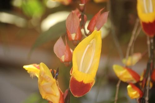 encore des fleurs au Costa Rica