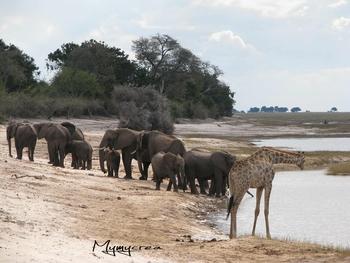 5 éléphants bord eau