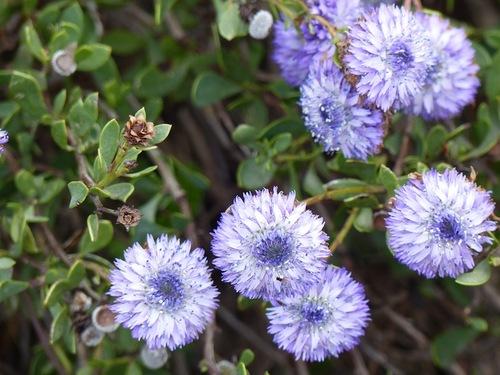 Fleurs des Alpilles