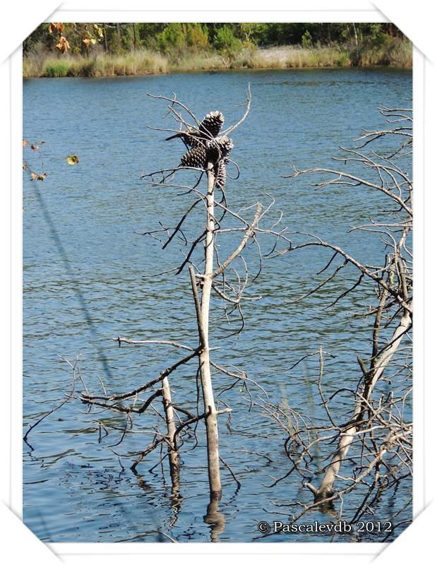 Les lacs de Lamothe, Bernadas et grand Bernadas à Hostens - 3/7