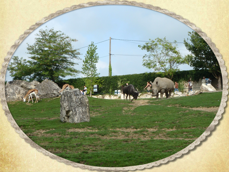 41110 Saint Aignan sur Cher Zoo de Beauval