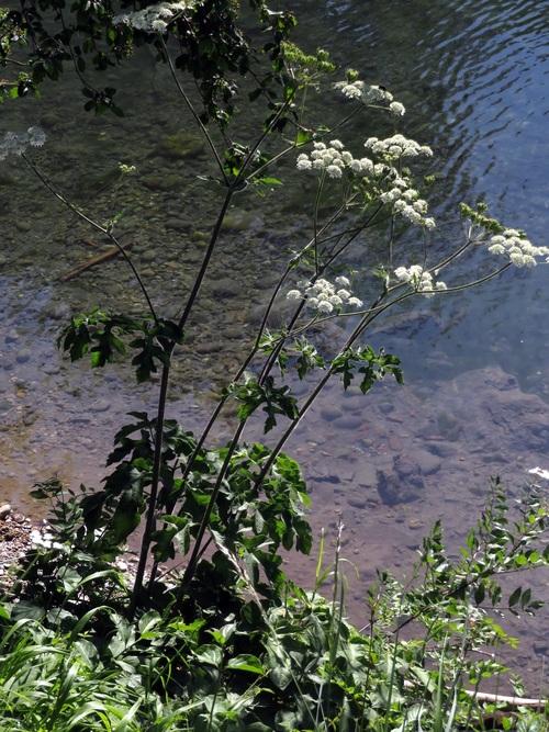 Les plantes sauvages le long de la Voie Bleue (ViaRhôna)