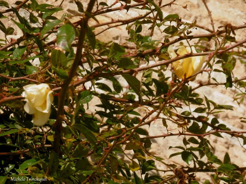 Une petite balade à SAUBUSSE (40), le 16 janvier...